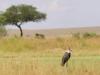 kenya-064